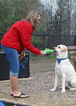 "Chili, a service dog in training, accepts a toy after his volunteer puppy raiser, Staicey Scholtz, tells him to ""hold."" Scholtz has taught him several commands, all of which could be use …"